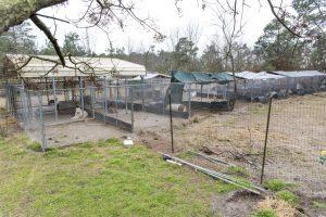 Alguns animais ficavam do lado de fora em lugares sem cobertura e proteção. (Foto: Reprodução / ASPCA)
