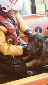 Cão foi encontrado pela Guarda Costeira em alto mar após quatro dias perdido. (Foto: Reprodução / Maritime and Coastguard Agency)