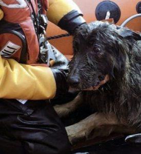 O cachorro Storm já estava exausto quando foi encontrado. (Foto: Reprodução / Pratical Boat Owner)