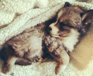 O pequeno cão foi resgatado após ser abandonado por sua mãe. (Foto: Reprodução / Life Daily)