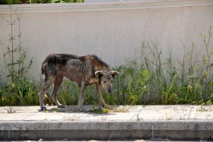 Petra foi encontrada em estado de total abandono pelas ruas da Grécia. (Foto: Reprodução / The Dodo / Valia Orfanidou)