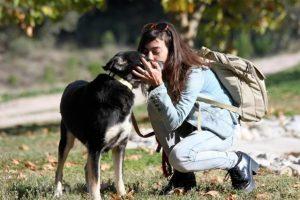 Hoje, Petra é uma cadela dócil e que se permite ser amada. (Foto: Reprodução / The Dodo / Valia Orfanidou)