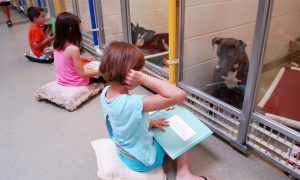 Programa traz crianças para ler para cães tímidos e que têm medo de interagir com humanos. (Fotos: Reprodução / Missouri Humane Society)