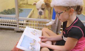 O programa procura ajudar cães tímidos e que passaram por traumas e tem medo de interagir com humanos. (Fotos: Reprodução / Missouri Humane Society)