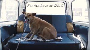 A van é utilizada para resgatar animais e para levar cães desabrigados que precisam de tratamento médico ao veterinário. (Foto: Reprodução / I Heart Dogs)