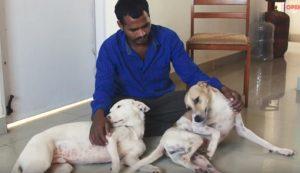 Balu cuida de cães desabrigados também em sua casa. (Foto: Reprodução / I Heart Dogs)