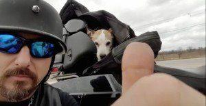 Motociclista-salva-cão-abandonado-na-estrada-e-faz-dele-seu-novo-copiloto-pdd2