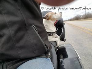 Mr. Davidson se tornou copiloto de Brandon e agora é cheio de mimos e amor. (Foto: Reprodução / Brandon Turnbow Youtube)