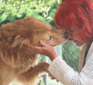 Heleene cuida de mais de 200 cães em sua própria casa. (Foto: Reprodução / The Dodo / Helene Wirt)