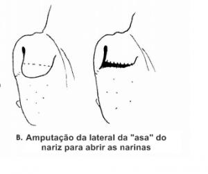 Durante a cirurgia um pedacinho da lateral do nariz do animal é tirado. (Foto: Reprodução / Ville Chamonix)