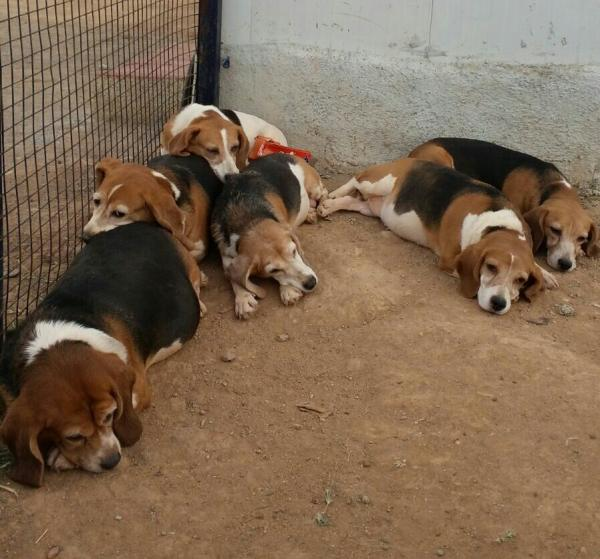 Cães que viviam como cobaias em laboratório na Índia. (Foto: Reprodução / Facebook / Chinthana Gopinath)