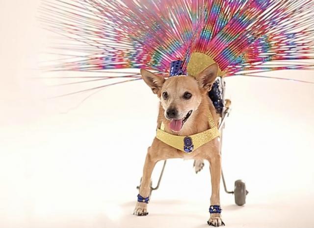 A cachorra Alê imitando as musas do carnaval. (Foto: Reprodução / Aunimal)