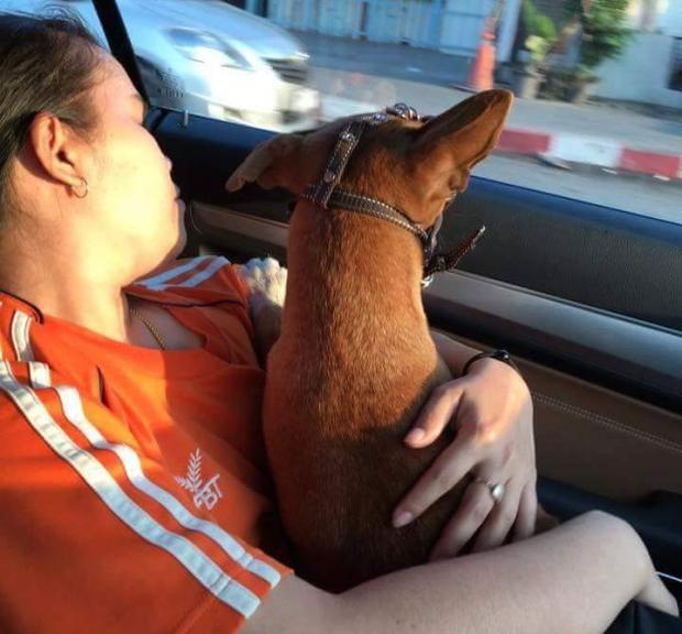 A cachorra indo para seu novo lar. (Foto: Reprodução / Coconuts Bangkok / Facebook Rungrot Kongpiban)