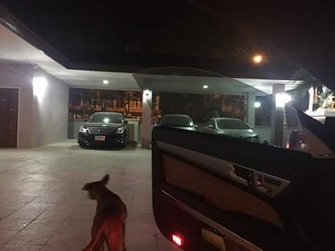 Conhecendo sua casa. (Foto: Reprodução / Coconuts Bangkok / Facebook Rungrot Kongpiban)