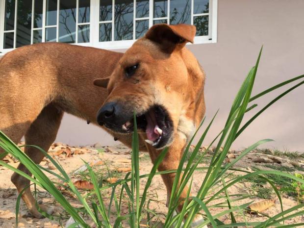 A cadela já parece estar bem adaptada. (Foto: Reprodução / Coconuts Bangkok / Facebook Rungrot Kongpiban)
