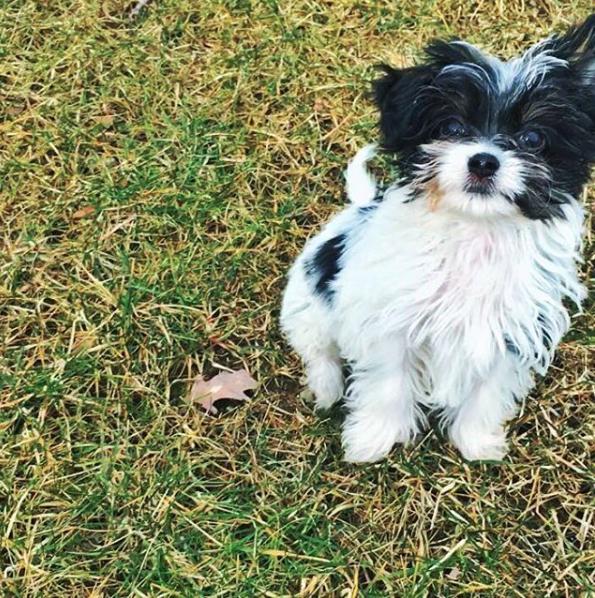 Fluffy é a nova filha canina da modelo brasileira e do jogador de futebol americano. (Foto: Reprodução / Instagram)