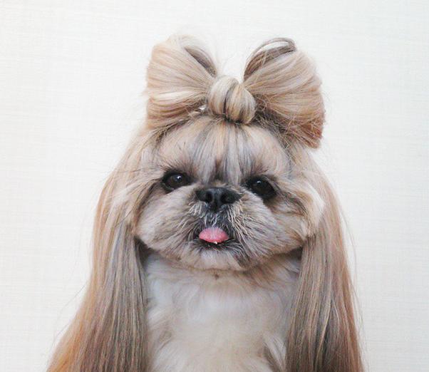 cachorra-penteado-01