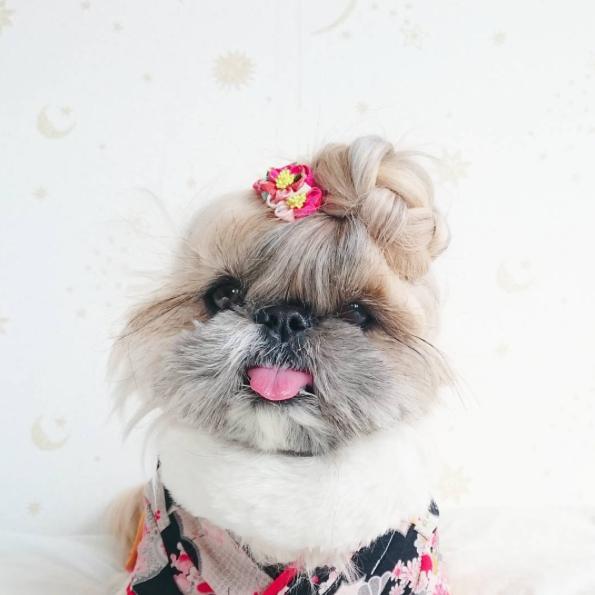 cachorra-penteado-03