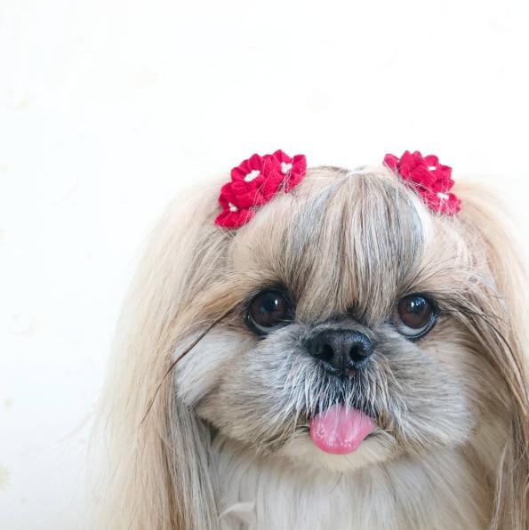 cachorra-penteado-04