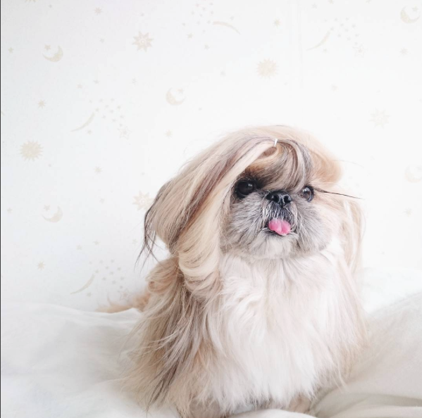 cachorra-penteado-06