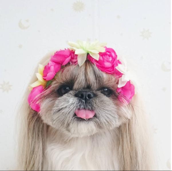 cachorra-penteado-07
