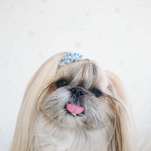 cachorra-penteado-08