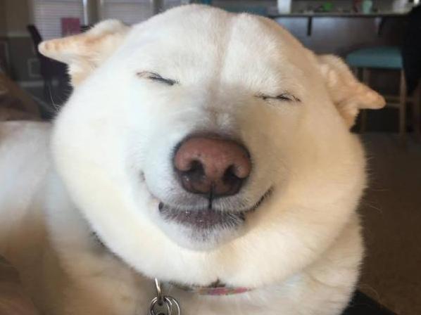A cachorra Kinta está sempre sorrindo. (Foto: Reprodução / Facebook)