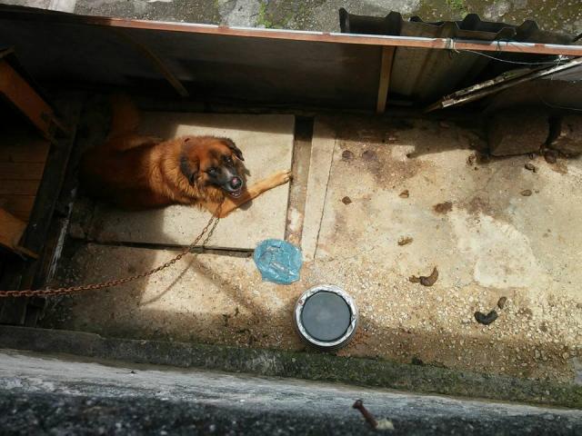 O cachorro vive preso. (Foto: Reprodução / Facebook / Cacia Sgarbi)