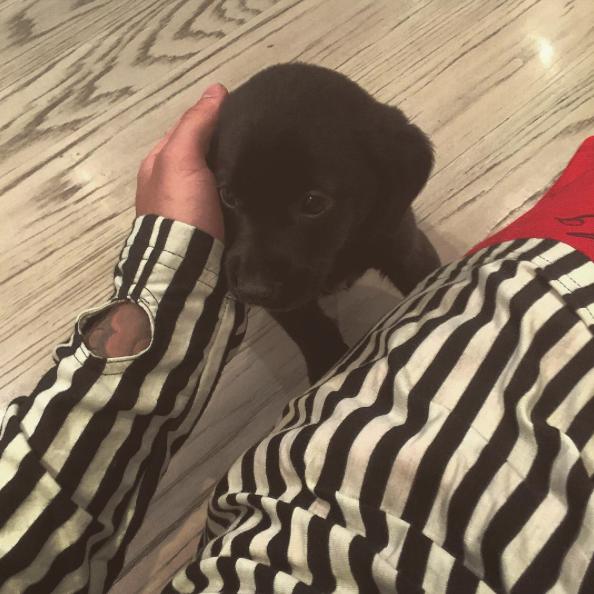 Justin Bieber e seu novo cachorrinho Phil. (Foto: Reprodução / Instagram)