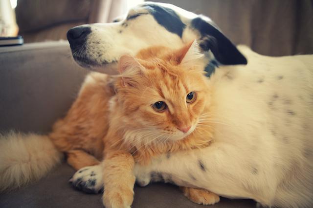 Os cientistas afirmam que o amor pode ser confirmado através de um hormônio chamado ocitocina. (Foto: Reprodução / Google)