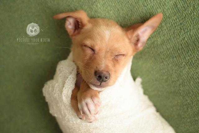 O cachorro tirou fotos típicas de recém-nascido. (Foto: Reprodução / Picture Your Birth)