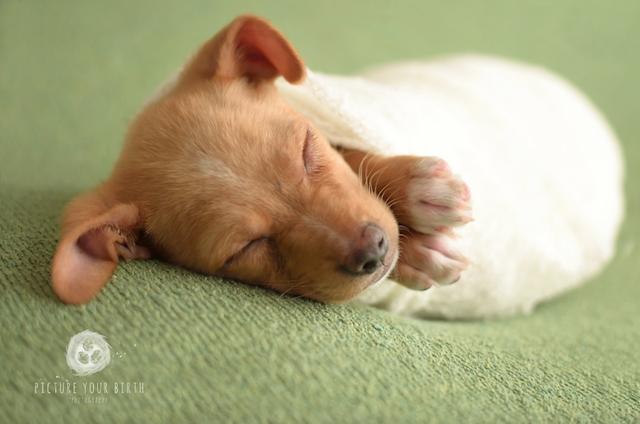 O cão já se tornou famoso por conta desse ensaio. (Foto: Reprodução / Picture Your Birth)