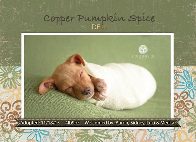 O cãozinho Copper ganhou um ensaio fotográfico de recém-nascido. (Foto: Reprodução / Picture Your Birth)