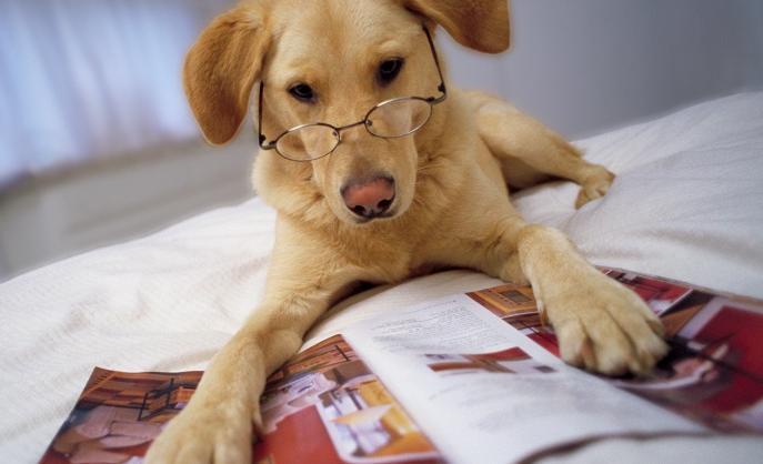 Será que cães inteligentes vivem mais tempo? (Foto: Reprodução / Dog Time)
