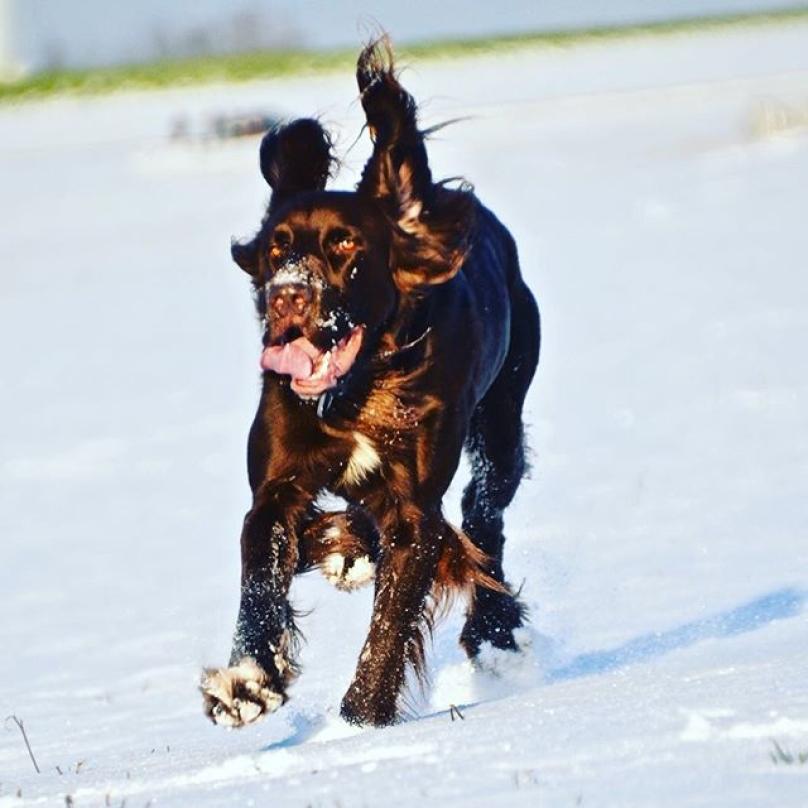 cachorro-neve-04