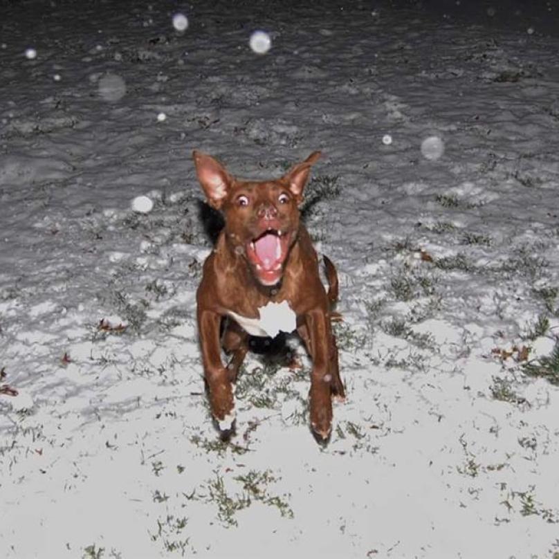 cachorro-neve-06