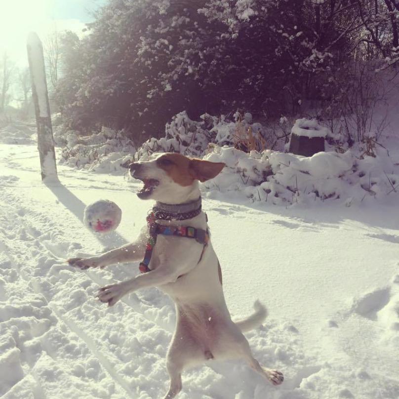 cachorro-neve-07