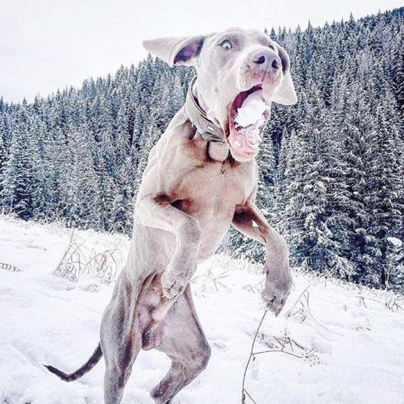 cachorro-neve-08