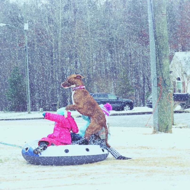 cachorro-neve-13