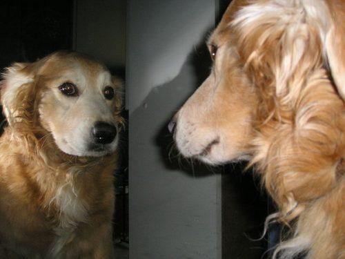Cachorros conseguem ver fantasmas? (Foto: Reprodução / Bark Post)