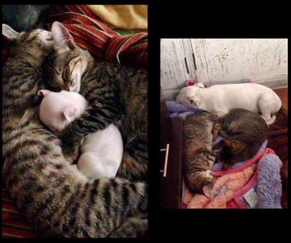 Comparação de foto antiga e atual. (Foto: Reprodução / Instagram / jandritoo)