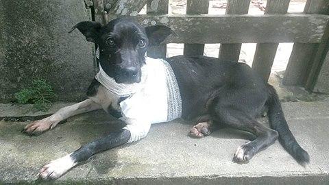 O cão Vitório conheceu o pior lado dos humanos. (Foto: Reprodução / Facebook / ONG Amor Vira-lata)