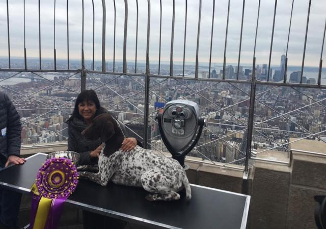 O grande vencedor visitou o Empire State Building. (Foto: Reprodução / Facebook / Westminster Kennel Club Dog Show)