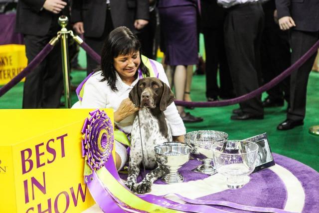 C.J. levou o prêmio de Best in Show. (Foto: Reprodução / Facebook / Westminster Kennel Club Dog Show)