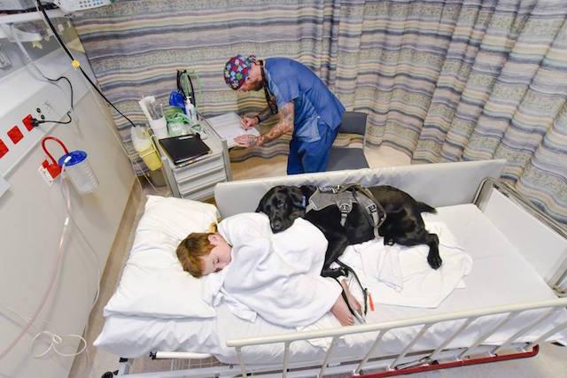 O cão ficou o tempo todo com o garoto. (Foto: Reprodução / Facebook / James Isaac)