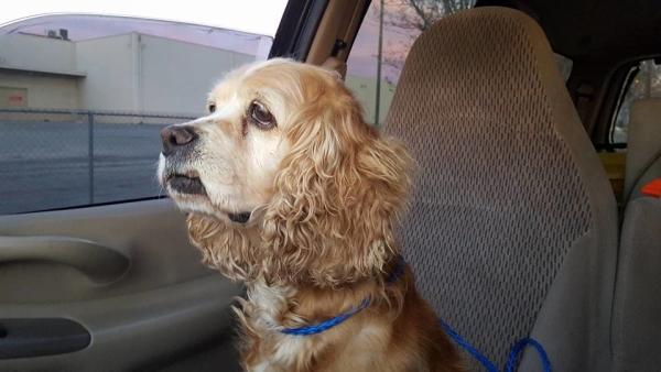 A cadela Cookie foi abandonada por sua família. (Foto: Reprodução / Bark Post)