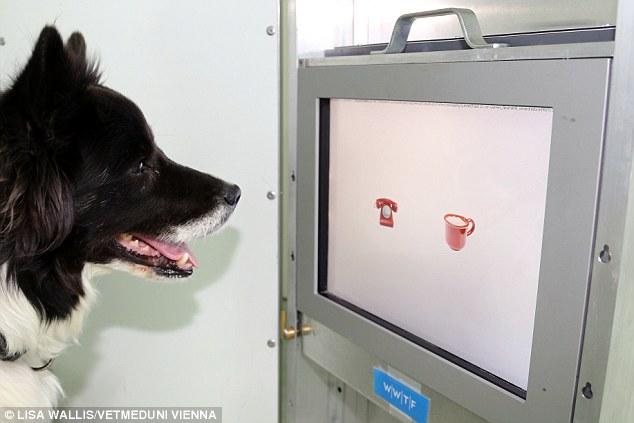 Os cães tinham que escolher a foto correta. (Foto: Reprodução / Daily Mail UK)