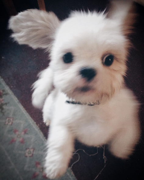 O cão foi adotado pela atriz. (Foto: Reprodução / Instagram / Maise Williams)