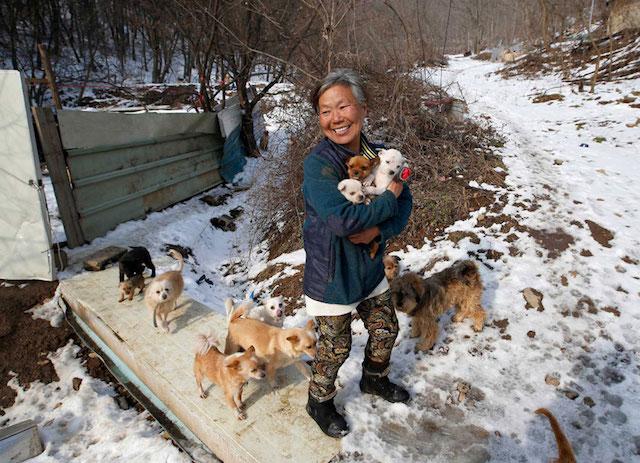 Jung cuida de mais de 200 cachorros. (Foto: Reprodução / Bored Panda)