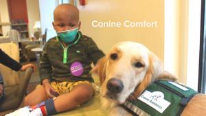 Os cães conseguem trazer mais conforto para os pacientes, além de darem muito amor. (Foto: Reprodução / I Heart Dogs)
